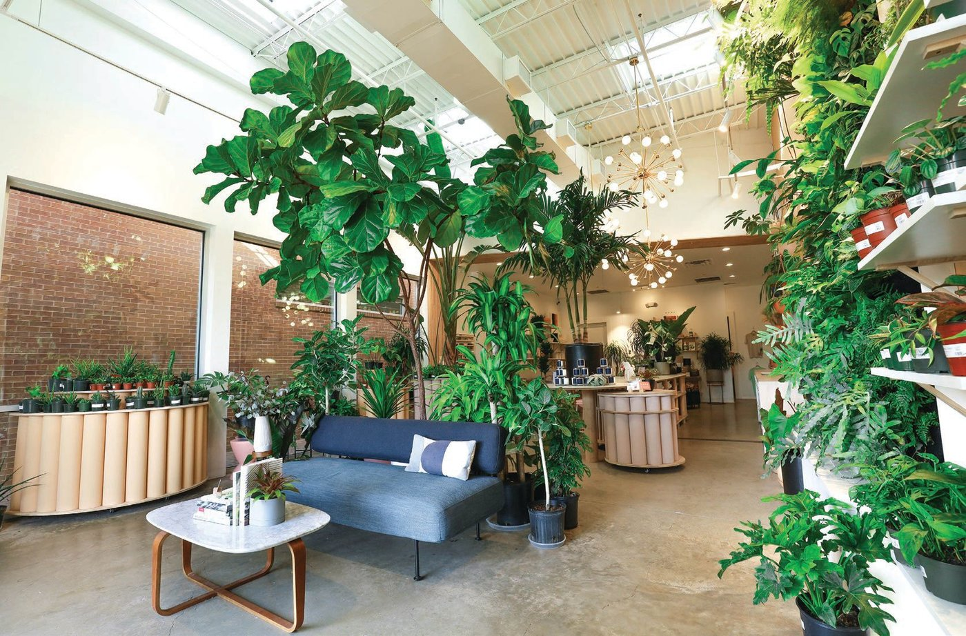 The Flora Culture's airy shop is a mood booster in itself. PHOTO BY DANIEL OAKES